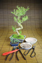 Bonsai Still life Stock Photo