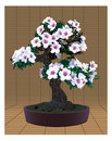Bonsai tree with flowers Royalty Free Stock Image