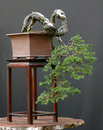 Bonsai Tree Growing Down Royalty Free Stock Photography