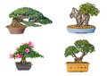 Bonsai tree set of trees in flowerpots on white background Royalty Free Stock Photos