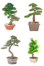 Bonsai tree set of trees in flowerpots on white background Royalty Free Stock Images