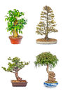 Bonsai tree set of trees in flowerpots on white background Stock Images