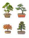 Bonsai tree set of trees in flowerpots on white background Stock Photography