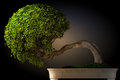 Bonsai tree side view Stock Image