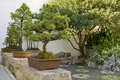 Bonsai Trees in Chinese Garden Royalty Free Stock Photography