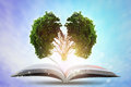 Book of growing knowledge with brains big tree. Royalty Free Stock Photo