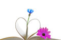Book pages with flowers purple flower blue cornflower and forming a heart or leaves isolated on white Stock Photography