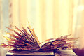 Book pages yellow leaves Royalty Free Stock Photo