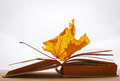 Book pages yellow leaves of autumn concept Royalty Free Stock Photo