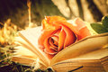 Book and rose Royalty Free Stock Photo