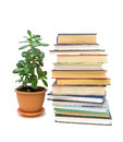 Books and green plant isolated on white background stack of in a flower pot Stock Photography