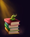 Bookworm with glasses on a stack of books Royalty Free Stock Photography