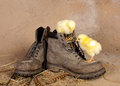 Boot climbing easter chicks against a grunge background Stock Images