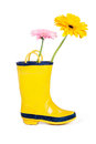 Boot with daisies Stock Photo