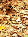 Boots in Autumn leaves Royalty Free Stock Images