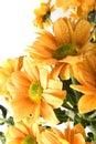 Boquet of orange flowers Stock Photo