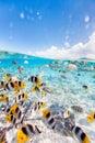 Bora Bora underwater