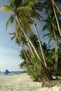 Boracay island white beach palm trees philippines Royalty Free Stock Photo