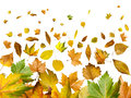 Border of autumn leaves Royalty Free Stock Photography