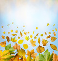 Border of autumn leaves Stock Photography