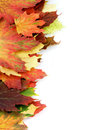 Border of autumn maple leafs multi colored isolated on white background Royalty Free Stock Images