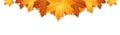 Border of autumn maples leaves vector illustration Stock Photo
