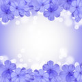 Border or background with blue flower plumbago Stock Image