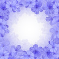 Border or background with blue flower plumbago Stock Photo