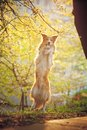 Border collie dog stand up spring sunshine background Royalty Free Stock Image