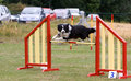 Border collie jumping at agility trial over the hurdle Stock Images