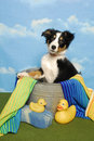 Border Collie puppy in a bath tub Royalty Free Stock Image
