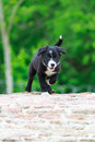 Border collies black puppy walk Stock Photos
