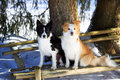Border collies sitting on the bench Stock Images