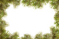 Border, frame from christmas tree branches Royalty Free Stock Photo