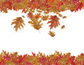 Border Frame of colored falling maple leafs with copy space isol Royalty Free Stock Photo