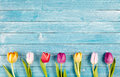 Border of fresh multicolored spring tulips Royalty Free Stock Photo
