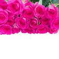 Border of fresh pink roses isolated on white background Royalty Free Stock Photo