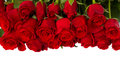 Border of fresh red  roses Royalty Free Stock Photo