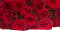 Border of fresh red roses pile on white background Stock Photography