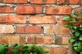 Border - Leaves crawling on brick wall Royalty Free Stock Photo