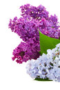 Border of lilac flowers isolated on white background Stock Photography