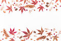Border made of autumn leaves, dried flowers and pine cones on white background. Flat lay, top view, copy space. Royalty Free Stock Photo