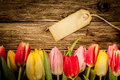 Border of multicoloured fresh tulips on old grunge weathered wooden boards with copyspace for a rustic background Royalty Free Stock Image