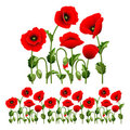 Border from poppies. Royalty Free Stock Photo