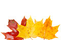 Border of yellow, orange  and red fall leaves Royalty Free Stock Photo