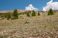 Boreas pass colorado logging stumps on in Stock Photos