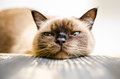 Bored cat the most in the world falling asleep Royalty Free Stock Photos