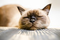 Bored and tired cat the most in the world falling asleep Stock Photo