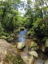 Borneo tropical rain forest stream fall Royalty Free Stock Photo