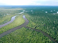 Borneo tropical rainforest taken by drone a part of central island the river and all the trees looks awesome from above Stock Photography